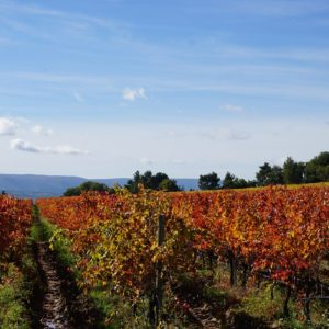 Southern Rhone Valley Wines