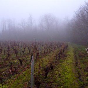 Toulouse Wine Tour