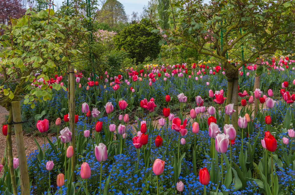 Giverny Art Tours