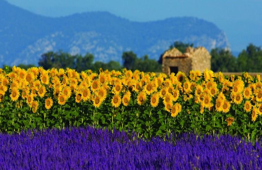 Lavender Route - France Journeys