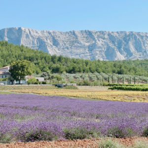 wine-tour-in-aix-en-provence-low